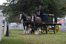 HOY_230314_clydesdales_3589