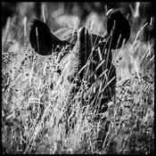 8856-Rhino_hidden_in_the_grass_Laurent_Baheux
