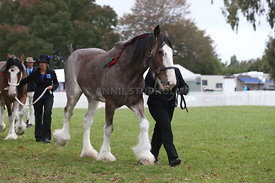 HOY_220314_Clydesdales_2374