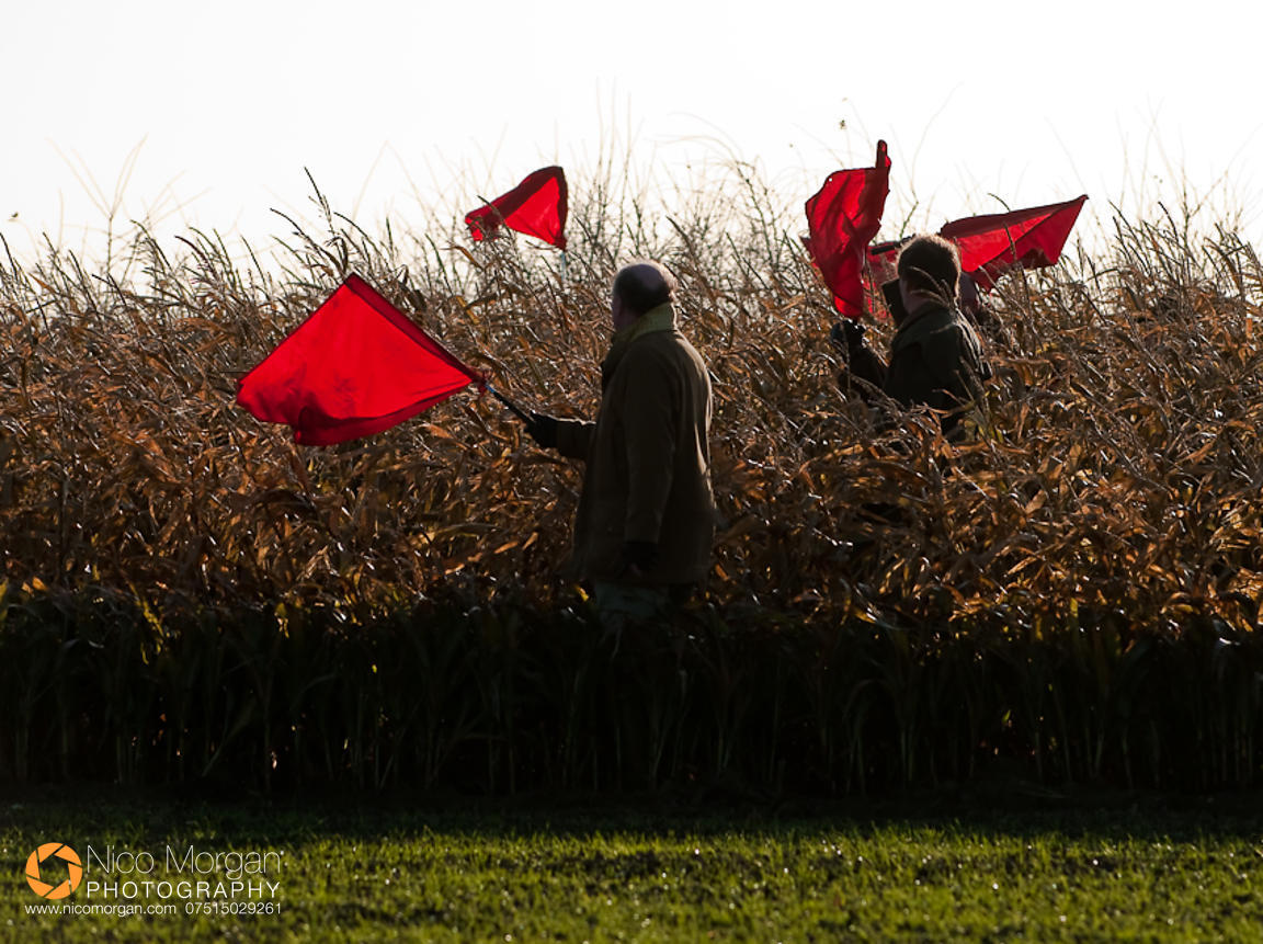 Beaters waving their flags on a game shoot