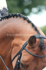 Close up of neck of bay horse in work