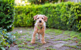 Scruffy Terrier Mix Puppy Standing in Garden