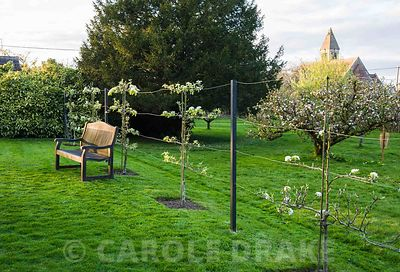 A post and wire fence with young pear trees espaliered against it divides the orchard from the upper arboretum.