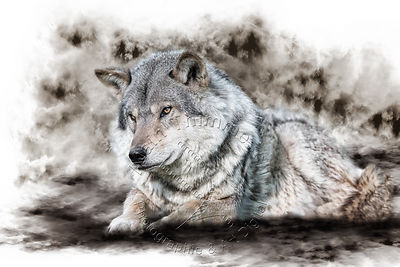 Art-Digital-Alain-Thimmesch-Loup-55