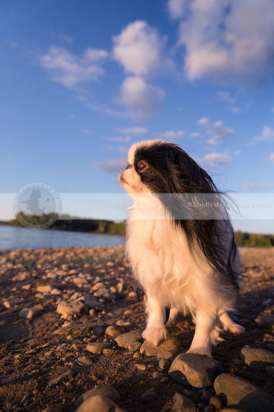 cute longhaired dog on lake shore beach under sky with clouds