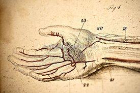 Veins of the Hand