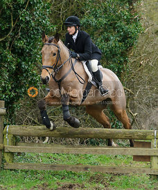Anna Hanson jumping a hunt jump near Knossington Spinney