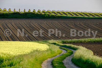 FRANCE, INDRE ET LOIRE, CAMPAGNE//France, Indre Et Loire, country side