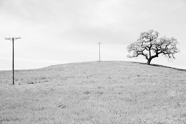 OAK AND POWER NAPA VALLEY CALIFORNIA BLACK AND WHITE