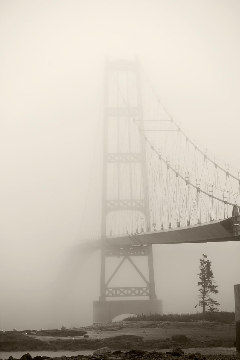 ACutting_fog_bridge_2976