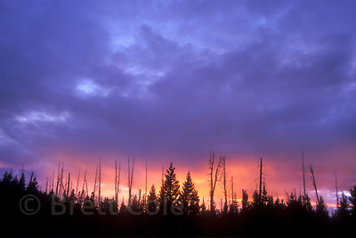 Orange and purple sunset against native Boreal forest in the High Plateau (Caribou Country), near Tweedsmuir Park, British Columbia.