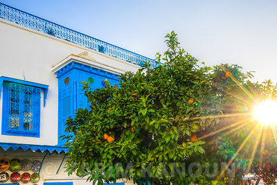 Sidi Bou Said orange tree sunshine