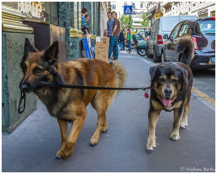 Dogs in the city photos