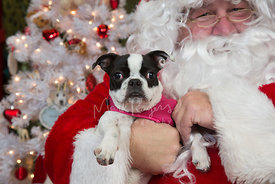 Small dog being held by Santa Claus