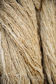 Bundle of Hemp Fibers