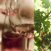 Wine Art Gallery | Green Grapes | Red Wine Photography