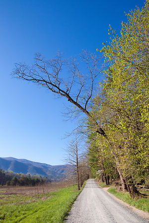 HYATT LANE CADES COVE SMOKY MOUNTAINS COLOR