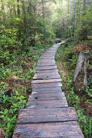 Lake Ozette Boardwalk - Olympic National Park