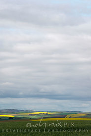 Fields of yellow canola flowers (rape seed)