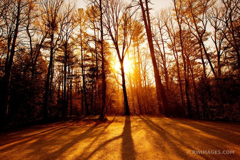 SUNRISE SPRING FOREST CADES COVE SMOKY MOUNTAINS COLOR