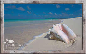 Special Treasure on the Beach, Anegada, BVI - Framed