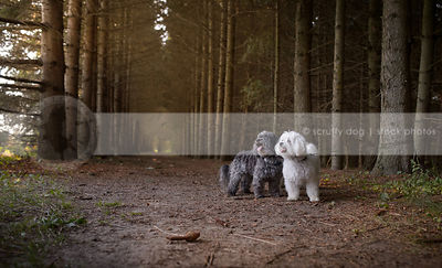two little fluffy dogs standing in tunnel of trees
