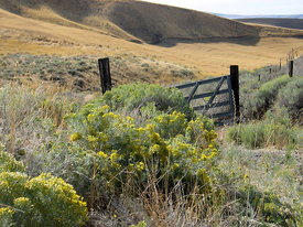 Eastern Oregon gate