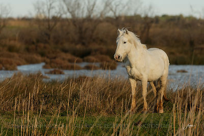 Camargue photos