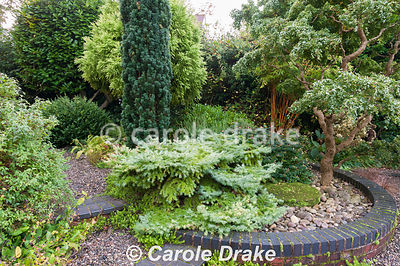 Circular raised bed of shrubs and trees with contrasting foliage including Robinia pseudoacacia 'Lace Lady', Hypericum Magical Beauty = 'Kolmbeau', bamboo, and conifers including spreading Larix kaempferi 'Nana' and Taxus baccata 'Fastigiata'.