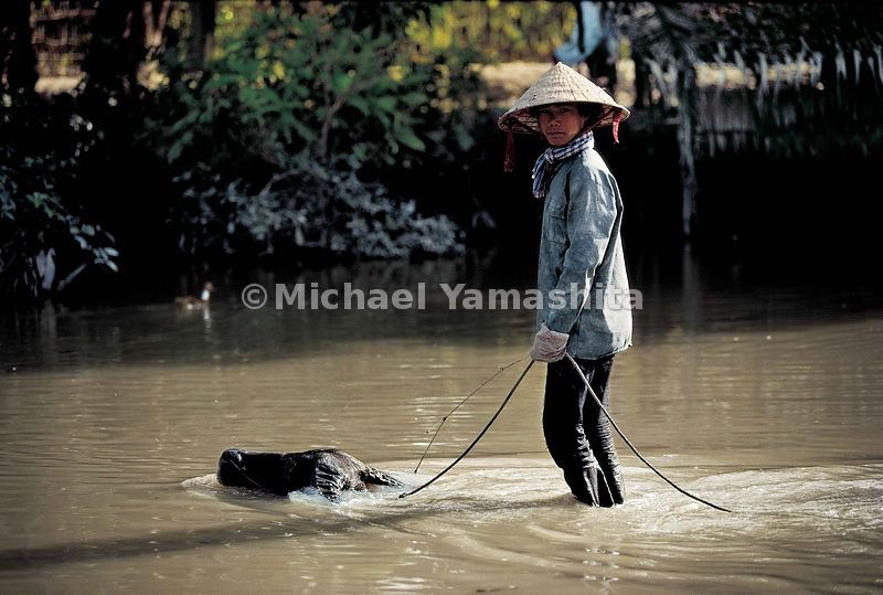 Water buffalo surfing, Mekong Delta.