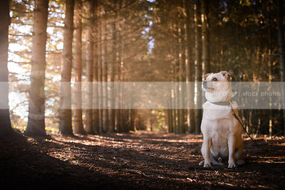 small cream colored dog sitting in tunnel of pine trees