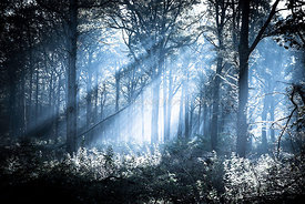 Forest_beams_blue
