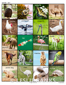 animals_set1_ds