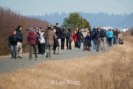 People Viewing Snowy Owls along Boundary Bay Dyke Trail