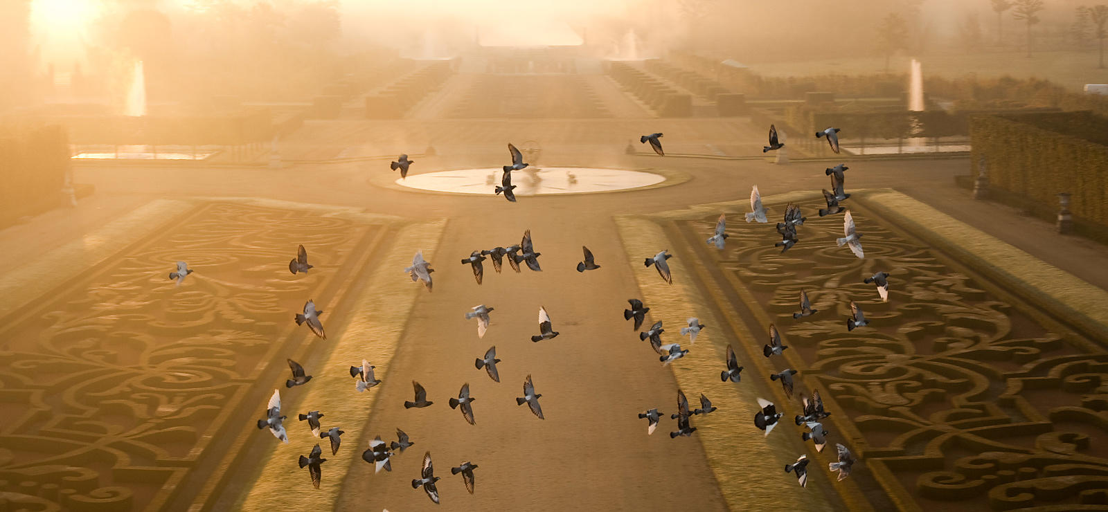 FLYING BIRDS AT SUNRISE IN CHAMP DE BATAILLE GARDEN