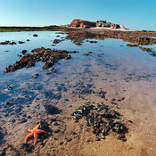 Starfish on Hilbre Island