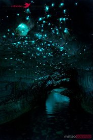 Famous glowworm cave, Waitomo caves, New Zealand