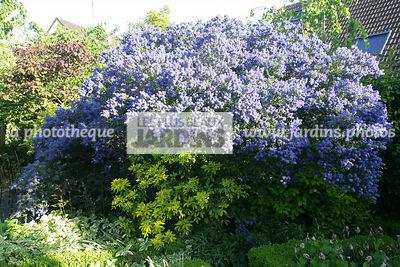 la phototh que les plus beaux jardins arbustes le plus grand choix de photos de jardin. Black Bedroom Furniture Sets. Home Design Ideas