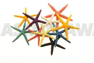 Colorful Starfish