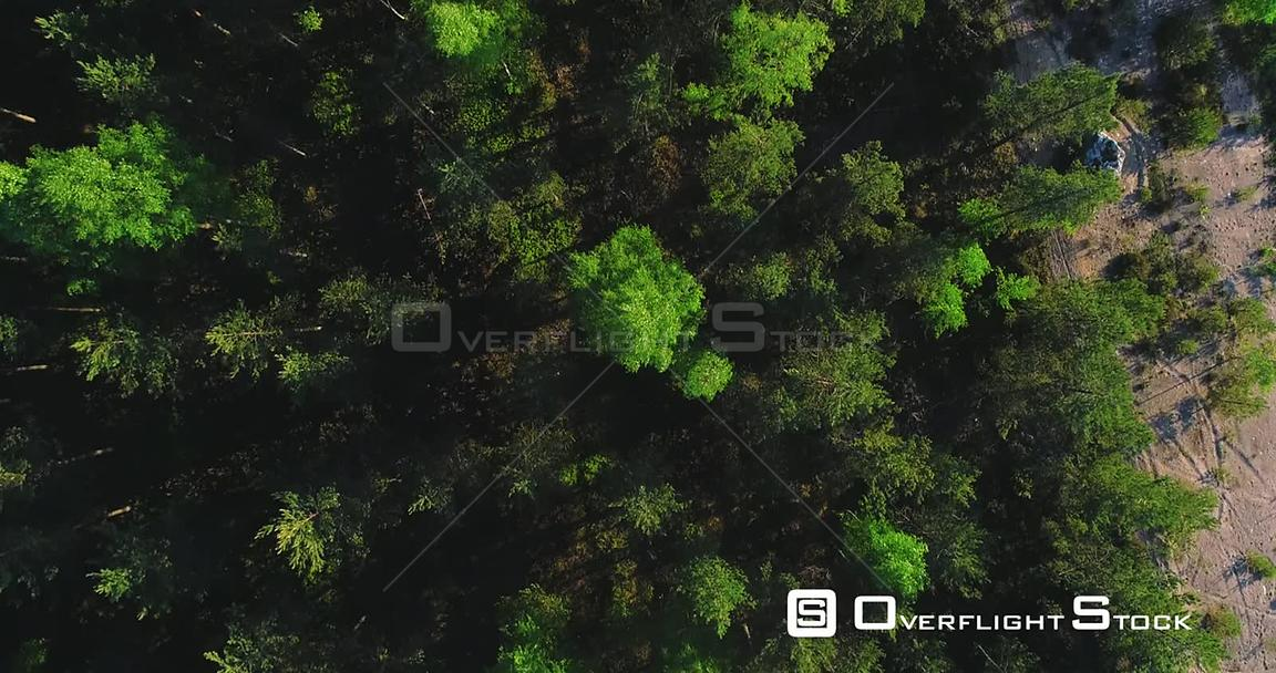 Spring Forest, Aerial, Top Down, Drone Shot, Over Light Green Finnish Woods and Scandinavian, Green Gold Trees, on a Sunny, Summer Evening, in Finland, Scandinavia