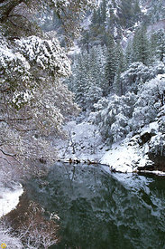 Winter Along the Feather River #1