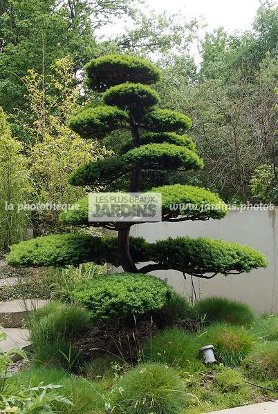 la phototh que les plus beaux jardins taxus baccata if baies arbre nuage paysagiste. Black Bedroom Furniture Sets. Home Design Ideas