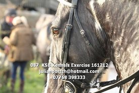 087__KSB_Kennels_Exercise_161212
