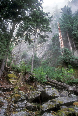 Foggy old-growth forest on the Squamish Chief, Squamish, British Columbia. The Chief is the second largest granite monolith in the world.