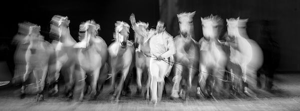 Cheval_Passion_20160123-4389