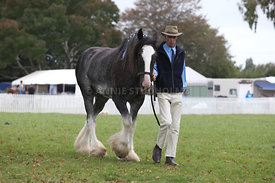 HOY_220314_Clydesdales_2376