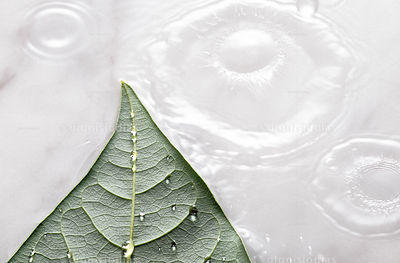 Splashes of water droplets over marble and green leaf