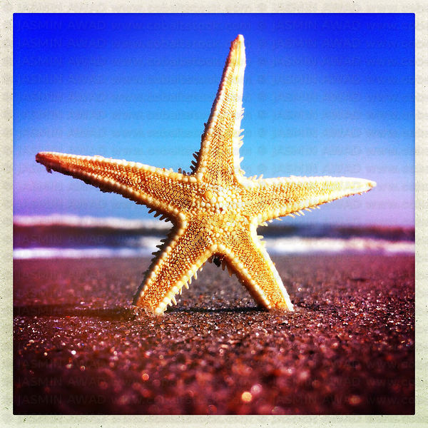 Starfish at the beach Smartphone filter effect