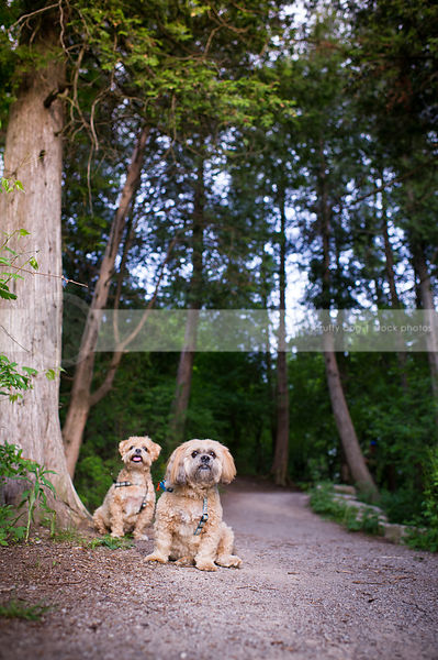 two cute small dogs posing sitting near tree on forest path