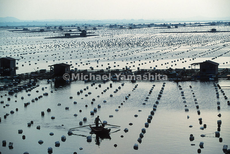 Oyster beds and fish farms in Xiamen, China.